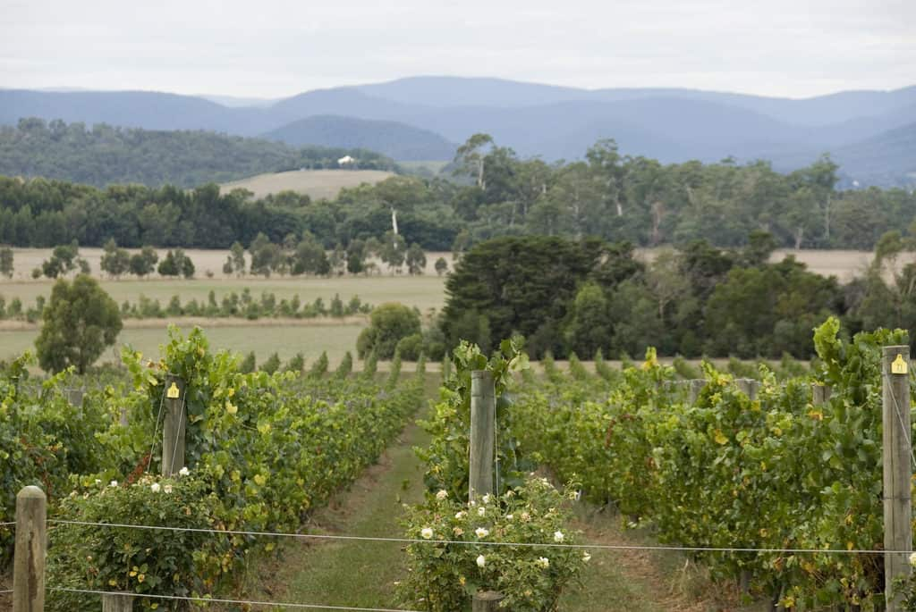 Yarra Valley Wine Tour during the Australian Open